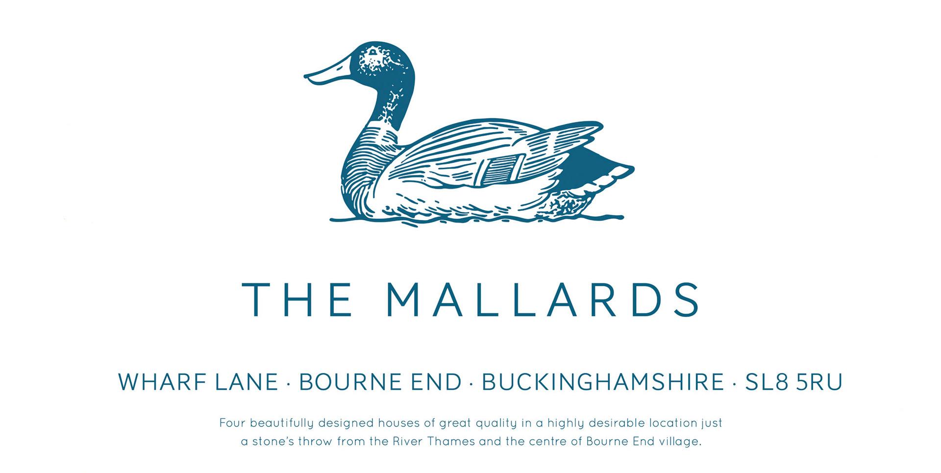 mallards-2a